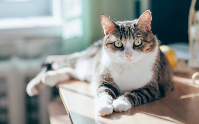 Cat Couple Only Adopt Special Needs Cats